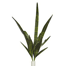Sanseveria Leaf - Set of 3