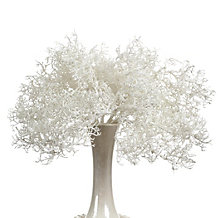 Coral Bush - Set of 3