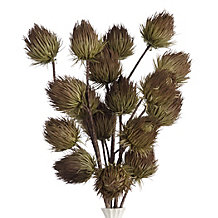 Thistle Branch - Set of 3