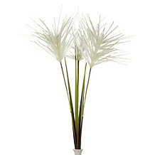 Plume Grass - Set of 3