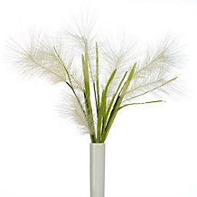 Porcupine Grass - Set of 3