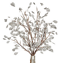 Silver Dollar Branch - Set of 3