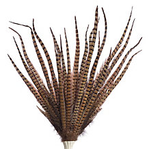 Pheasant Feather Spray - Set of 3