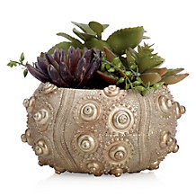 Succulent With Urchin Pot