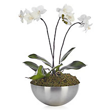 Phalaenopsis With Metal Pot