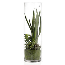 Succulent In Glass Vase