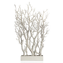 White Branch Tree In Pot