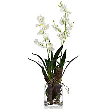 Oncidium In Glass
