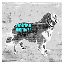 Golden Retriever - Glass Coat