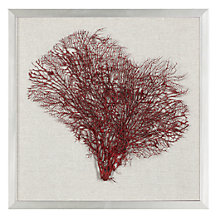 Red Sea Fan Shadowbox