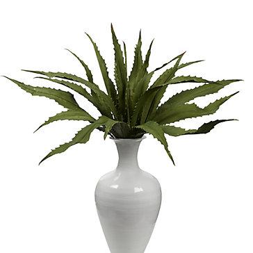 Agave Leaf Plant