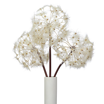 Giant Dandelion - Set of 3