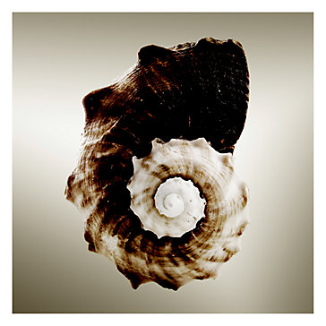 Gilt Shells 3