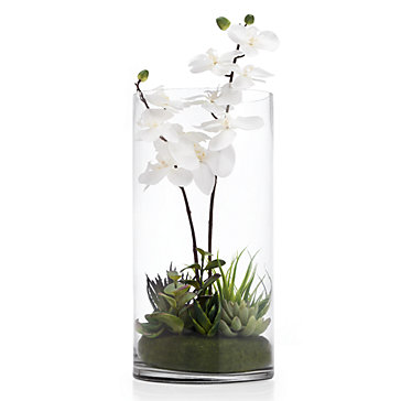 Orchid With Succulents In Vase