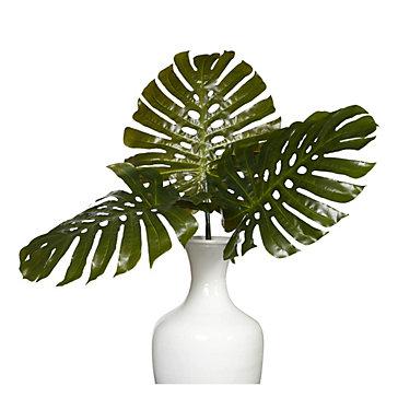 Split Philodendron Leaf