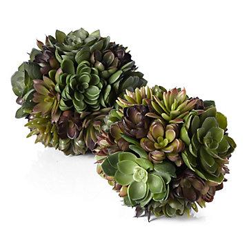 Succulent Ball Stemmed Floral Floral Plants Amp Trees