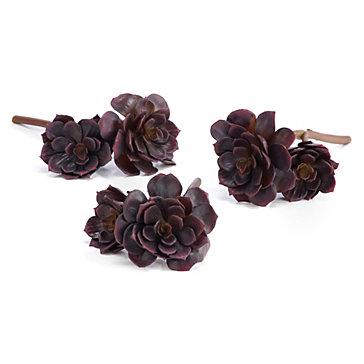 Succulent Echeveria - Set of 3