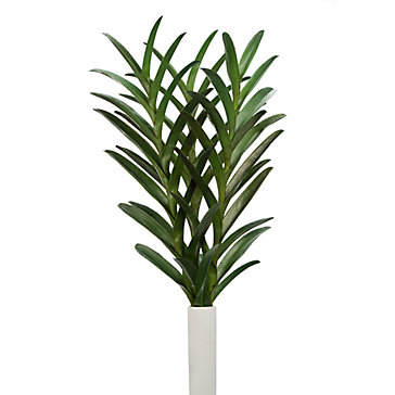 Vanda Leaf - Set of  3