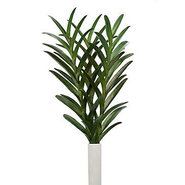 Vanda Leaf - Set of  3