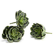 Large Echeveria - Set of 3