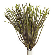 Papyrus Branch - Set of 3