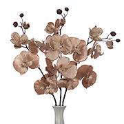 Velvet Phalaenopsis - Set of 3