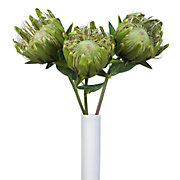 King Protea - Set of 3