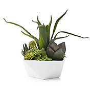 Aloe And Succulent Geo Pot