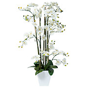 Potted Phalaenopsis Orchid - White in White Resin Planter