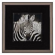 Zebra In Slate