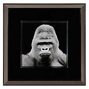 Gorilla In Slate
