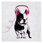Music Love French Bull Dog