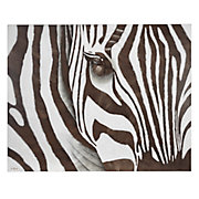 Zebra on Canvas