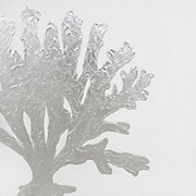 Silver Coral