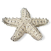 Jeweled Trinket Box - Starfish