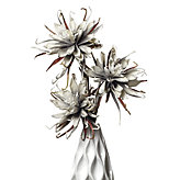 Spider Daisy - Set of 3 - Grey