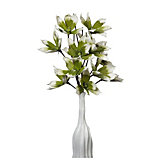 Magnolia Stem - Set of 3 - Pear