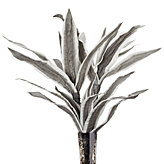 Seaweed Stems - Set of 3 - Grey