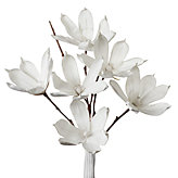 Magnolia Stem - Set of 3 - White