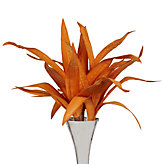 Seaweed Stems - Set of 3 - Orange