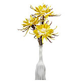 Spider Daisy - Set of 3 - Lemon