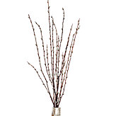 Pussy Willow Spray - Set of 6