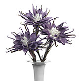 Spider Daisy - Set of 3 - Light Thistle