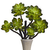 Echeveria Stem - Set of 3 - Green