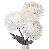 Giant Mum - Set of 3