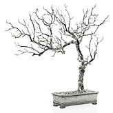 Bonsai Tree - Silver