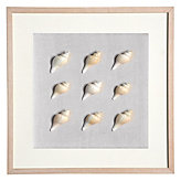 Spindle Shell Shadowbox