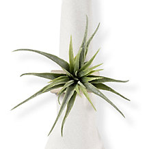 Air Plant Napkin Ring - Set of 4