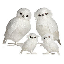 Snowy Owl - Set of 2