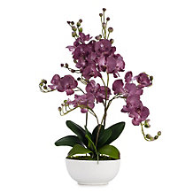 Orchid Amethyst With Pot